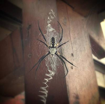 Boris The Silk Spinning Spider Original by Angela McKinney