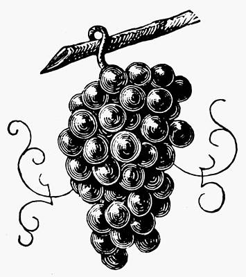 Botany Grapes Print by Granger