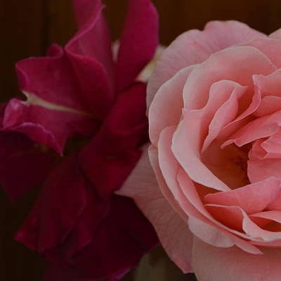 Photograph - Bouquet Of Roses by Cheryl Miller