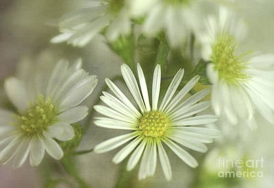 Bouquet Of White And Green Art Print by Julie Palencia
