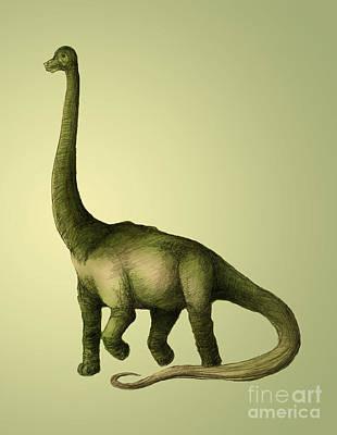 Brachiosaur Photograph - Brachiosaurus by Spencer Sutton