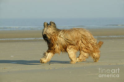 Profile Shadow Photograph - Briard Dog by Jean-Michel Labat