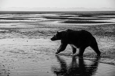 Walking In Tide Photograph - Brown Bear, Ursus Arctos, Walking by Bob Smith