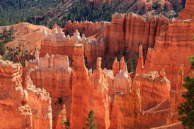 Photograph - Bryce Canyon Red Rock by Aidan Moran