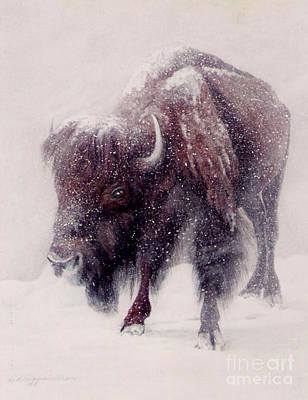 Buffalo Blizzard Art Print by DiDi Higginbotham
