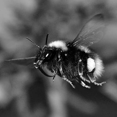 Windy Mixed Media - Bumblebee Macro by Tommytechno Sweden