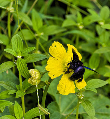 Bumblebee Photograph - Bumblebee On Flower by Image World