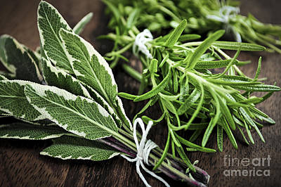 Spice Photograph - Bunches Of Fresh Herbs by Elena Elisseeva