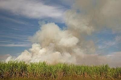Burning Sugar Cane Art Print
