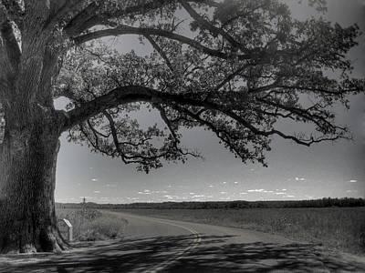 Burr Oak Tree Art Print by Jane Linders