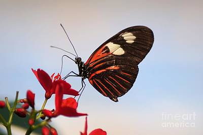 Flowers Photograph - Butterfly 3 by KJ Bruce - Creatocity