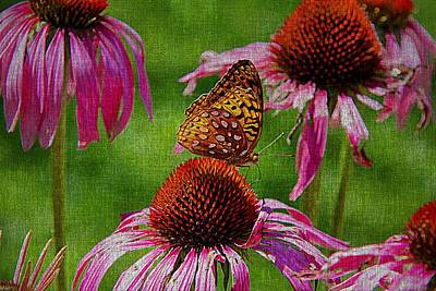 Photograph - Butterfly And Cone Flowers by Tom Culver