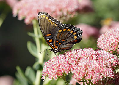 Butterfly Art Print by Denise Pohl