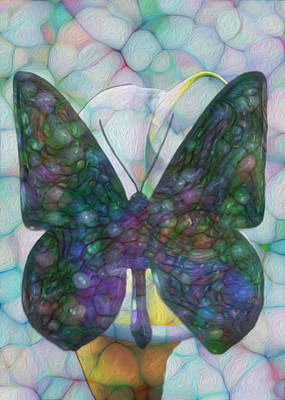 Butterfly Art Print by Jack Zulli
