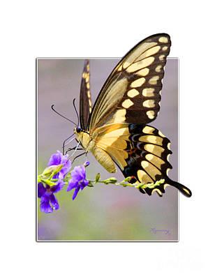 Butterfly Art Print by Mariarosa Rockefeller