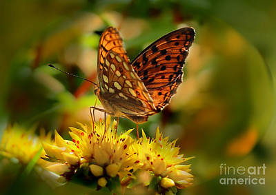 Photograph - Butterfly by Sylvia  Niklasson