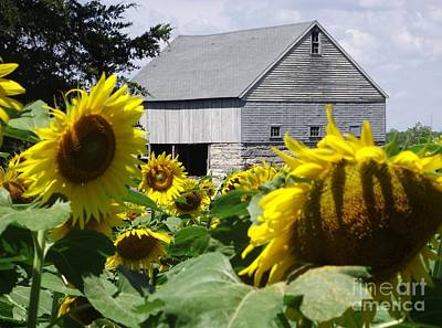 Photograph - Buttonwood Farm by Michelle Welles
