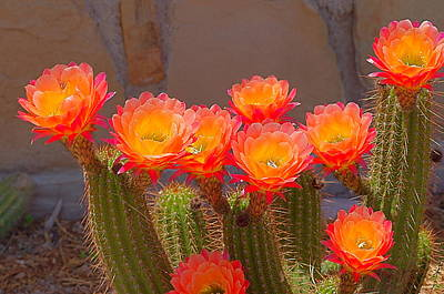 Cactus In Bloom Art Print by Bob Marquis