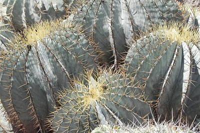 Photograph - Cactus  by Jesus Nicolas Castanon
