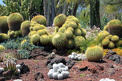 Cactus Art Print by Jim McCullaugh
