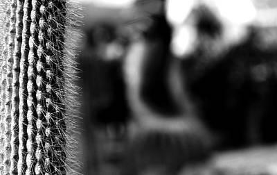 Photograph - Cactus by Sumit Mehndiratta
