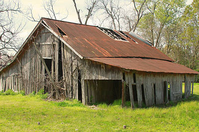 Photograph - Cajun Cypress Barn by Ronald Olivier