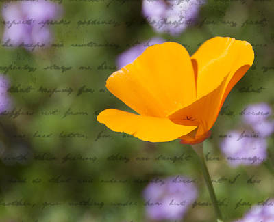 Photograph - California Poppy by Diane Wood