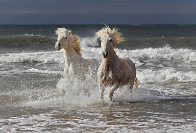 Grace Photograph - Camargue Horse Running Out Of Surf by Adam Jones