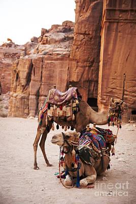 Sahara Pyrography - Camels by Jelena Jovanovic