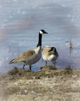 Appleton Photograph - Canadian Geese by Carol Toepke