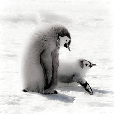 Cape Washington, Antarctica Print by Janet Muir