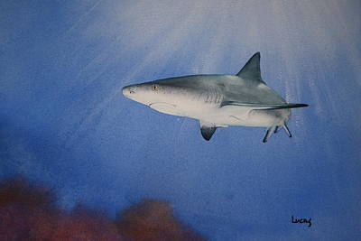 Caribbean Reef Shark 1 Art Print by Jeff Lucas