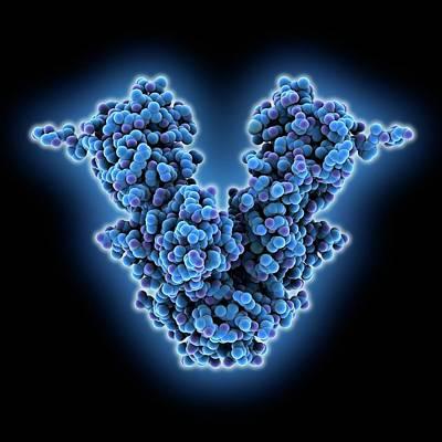 Caspase-activated Dnase Molecule Art Print
