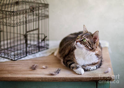 Cat And Bird Cage Art Print by Nailia Schwarz
