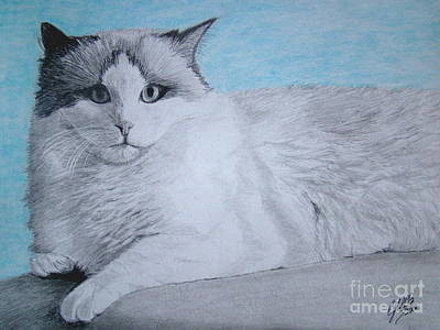 Wall Art - Drawing - Cat by Cybele Chaves