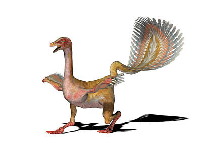 Caudipteryx Dinosaur Art Print by Friedrich Saurer