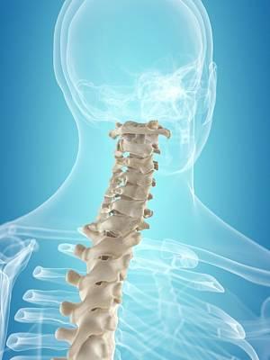 Cervical Spine Art Print by Sciepro