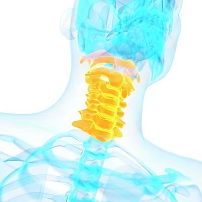 Cervical Spine Art Print by Sebastian Kaulitzki