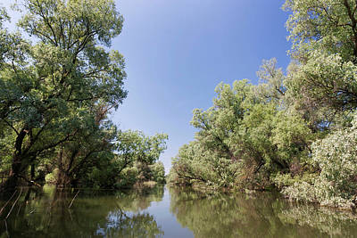 Flooding Photograph - Channels And Lakes In The Danube Delta by Martin Zwick