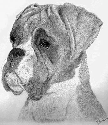 Boxer Drawing - Charlie by Rosanna Maria