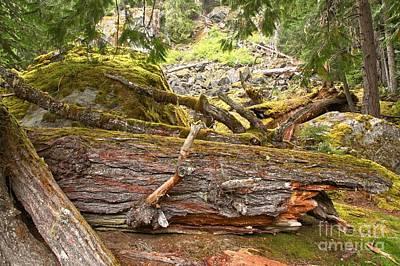 Photograph - Cheakamus Rainforest Debris by Adam Jewell