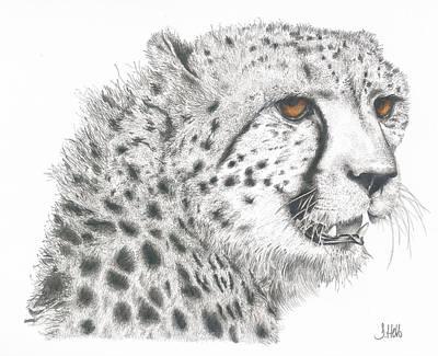 Cheetah Glory Art Print by John Hebb