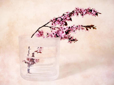 Cherry Blossoms Photograph - Cherry Blossom by Jessica Jenney