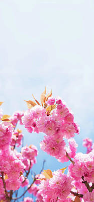 Cherry Blossom Art Print by Wladimir Bulgar