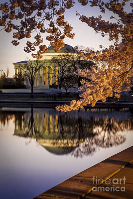Photograph - Cherry Blossoms At Dawn by Brian Jannsen