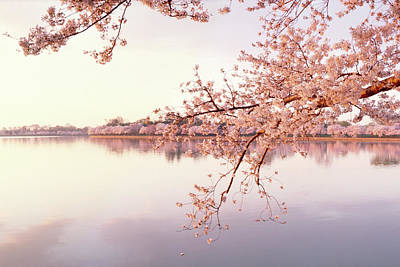 Photograph - Cherry Blossoms At The Lakeside by Panoramic Images