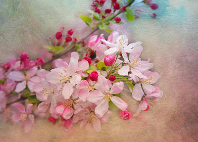 Cherry Blossoms Art Print by Lynn Bauer