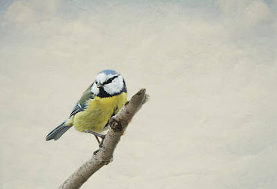 Chickadee Mixed Media - Chickadee by Heike Hultsch