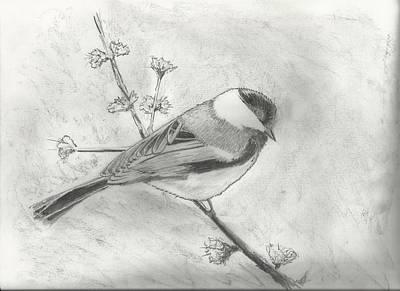 Chickadee Drawing - Chickadee On Branch by Christopher Hughes