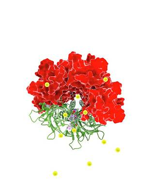 Membrane Photograph - Chloride Channel And Ivermectin Complex by Ramon Andrade 3dciencia